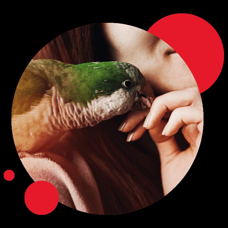 Linha Aves & Pássaros