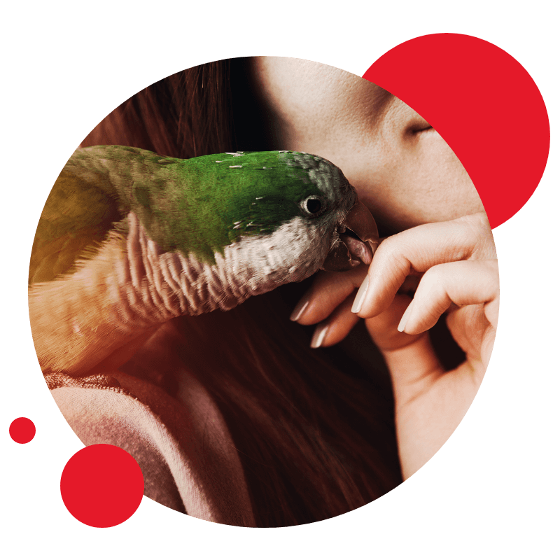 Aves & Pássaros
